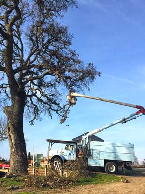 about-us-tree-trimmers